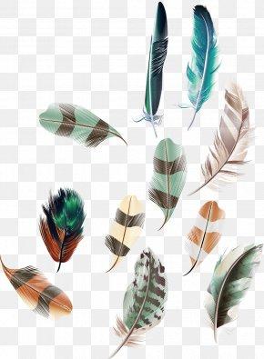 Vector Feather Decoration - Euclidean Vector Feather Egg PNG