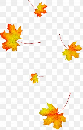 Autumn Maple Leaf - Maple Leaf PNG