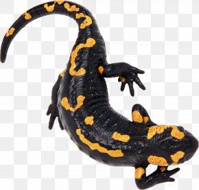 Lizard - North African Fire Salamander Alpine Salamander Caucasian Salamander PNG