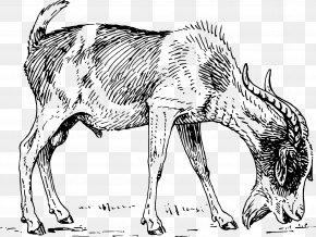 Goat - Boer Goat Angora Goat Grazing Horn Clip Art PNG