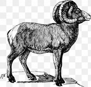 Sheep - Bighorn Sheep Drawing Clip Art PNG
