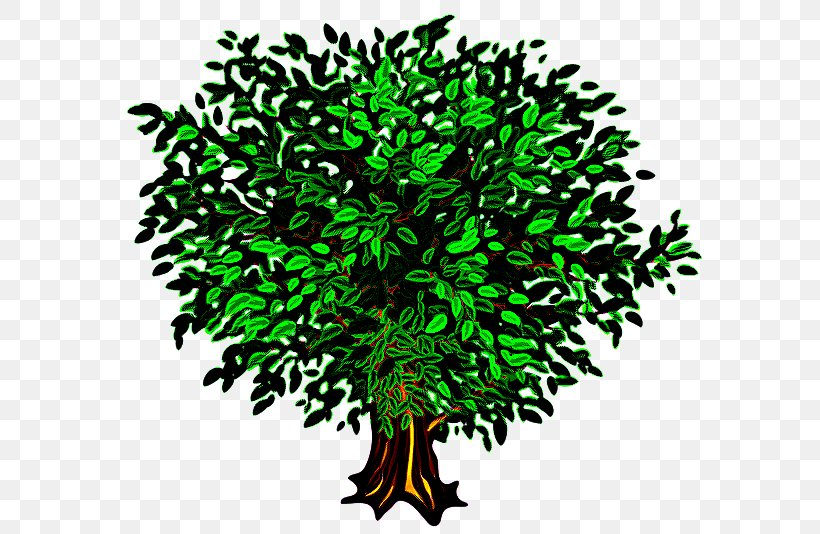 Green Tree Leaf Plant Grass, PNG, 600x534px, Green, Grass, Leaf, Plant, Tree Download Free