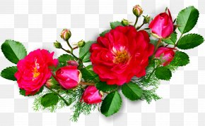 Line Drawing Floral Decoration Pictures - Picture Frame Download Mobile App Clip Art PNG