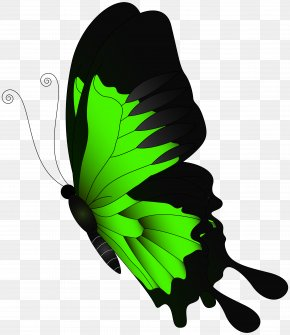 Green Flying Butterfly Clip Art - Butterfly Green Clip Art PNG
