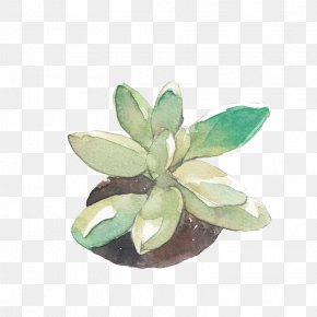 Fleshy Baby - Watercolour Flowers Watercolor: Flowers Watercolor Painting Drawing PNG
