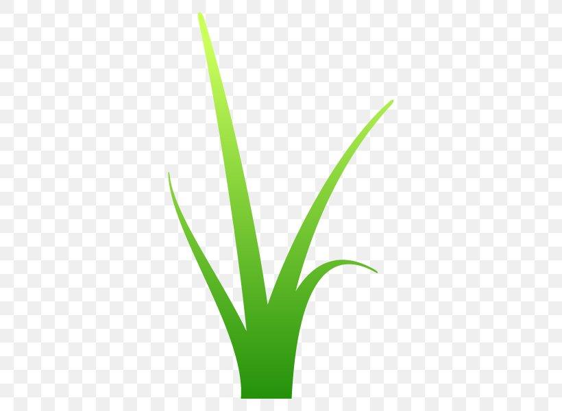 Leaf Grasses Plant Stem Line Font, PNG, 600x600px, Leaf, Flowerpot, Grass, Grass Family, Grasses Download Free