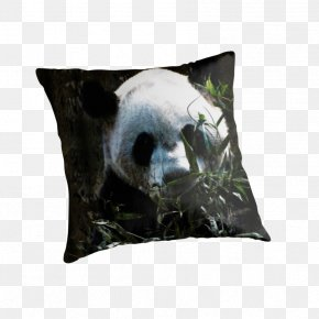 Giant Panda - Giant Panda Bear Throw Pillows IPod Touch Cushion PNG