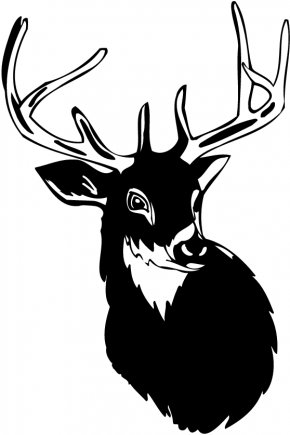 Free Deer Pictures - White-tailed Deer Moose Antler Clip Art PNG