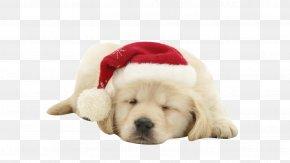 Puppy - Puppy Dog Santa Claus Christmas Wallpaper PNG