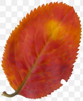 Beautiful Fall Leaf Clipart Image - Autumn Leaf Color Clip Art PNG