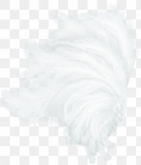 White Wings - White Feather Black Pattern PNG