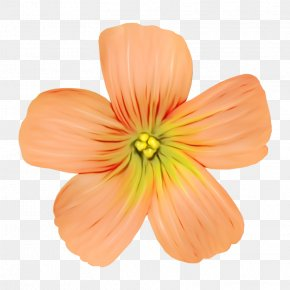 Wildflower Herbaceous Plant - Orange PNG