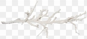 Salt - Branch Tree Twig Snow PNG