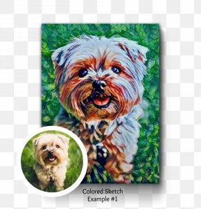Puppy - Yorkshire Terrier Morkie Cairn Terrier Affenpinscher Schnoodle PNG