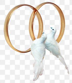 Wedding Ring - Columbidae Wedding Ring Clip Art PNG