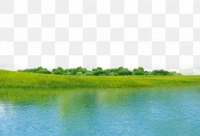 Nature Green River - Water Resources Ecosystem Green Grassland Wallpaper PNG