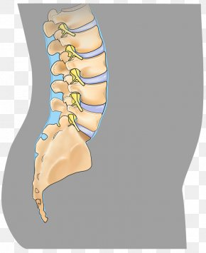 Minimally Invasive Spine Surgery Images Minimally