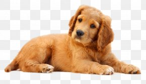 Dog - Dog Pet Puppy Cat PNG