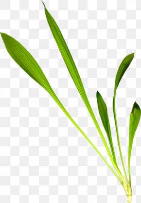 Leaf - Leaf Grasses Plant Stem Flower Family PNG