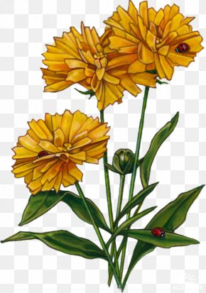 Flower - Cut Flowers Plant Stem Pot Marigold Petal PNG