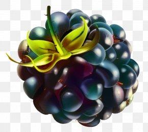 Raspberry Berries Blackberry Mulberry Fruit PNG