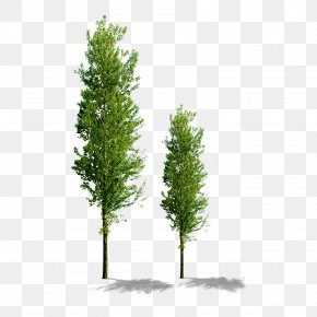 Trees - Tree Computer File PNG