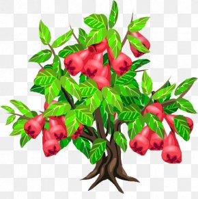 Wax Apple Tree - Java Apple Fruit Tree Strawberry PNG
