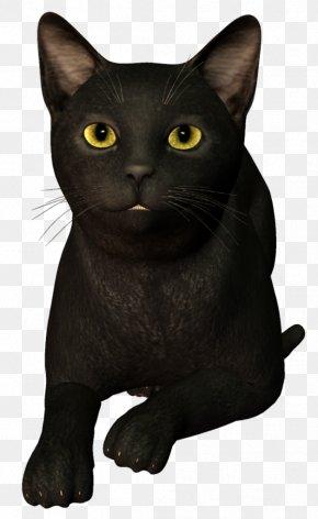 Black Cat Tail White - Bombay Cat Black Cat Korat Burmese Cat Chartreux PNG