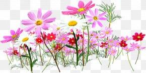 Small Flower - Flower Garden Cut Flowers Clip Art PNG