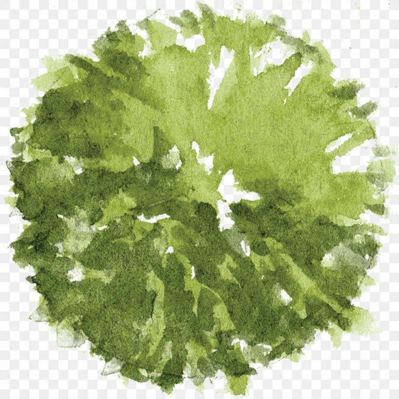 Tree Architectural Plan Landscape Architecture, PNG, 900x900px, Tree, Architectural Plan, Architecture, Drawing, Grass Download Free
