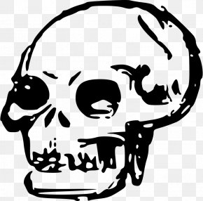 Skull - Human Skull Symbolism Human Skeleton Clip Art PNG