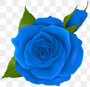 Blue Rose And Bud Transparent Clip Art - Rose Pink Clip Art PNG