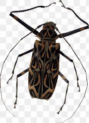 Bug Image - Lib Software Bug PNG