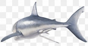 Great White Shark Torso - Tiger Shark Great White Shark Shark Fin Soup Hungry Shark Evolution PNG