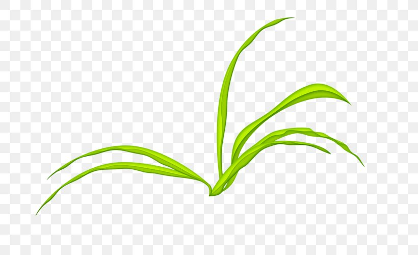 Leaf Grasses Green Tree Plant Stem, PNG, 800x500px, Leaf, Brand, Computer, Family, Grass Download Free