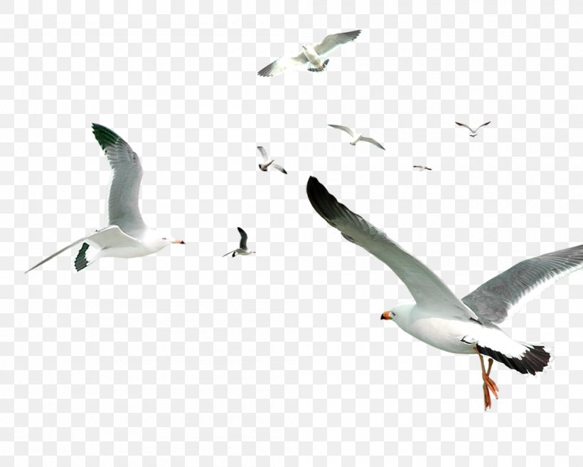 White Simple Birds Flying Material, PNG, 1000x800px, Bird, Android, Beak, Charadriiformes, Computer Font Download Free