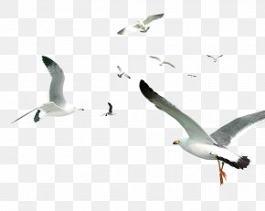 White Simple Birds Flying Material PNG