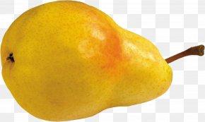 Pear Image - Papa Pear Saga European Pear Princeton University Rosaceae PNG