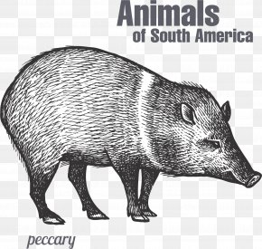 Hand Painted Sketch Wild Boar - Peccary Drawing Sketch PNG