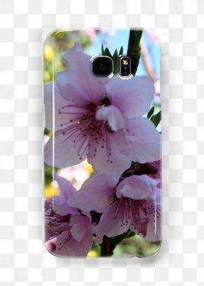 Peach Blossom - Flower Violet Lilac Lavender Purple PNG