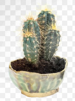 Cactus Image - Prickly Pear Cactaceae PNG