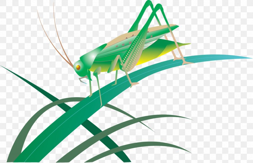 Insect Grasshopper Great Green Bush-cricket Bush Crickets, PNG, 1600x1035px, Insect, Animaatio, Arthropod, Bush Crickets, Caelifera Download Free