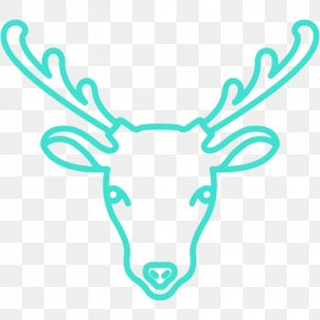 Goat - Sheep–goat Hybrid Drawing Sheep–goat Hybrid PNG