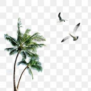 Palm Seagull - Island Clip Art PNG