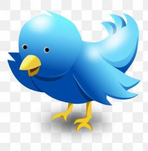 Bird Cartoon - Bird Columbidae Logo PNG