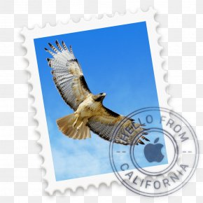 Email - Email Apple MacOS ICloud PNG