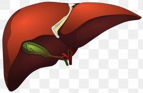 Liver - Computer Graphics Metafile Liver PNG