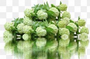 Flower - French Hydrangea Flower Garden 鉄板焼ステーキハウスマルオン PNG