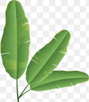 Banana Leaves - Banana Leaf Banana Bread Clip Art PNG
