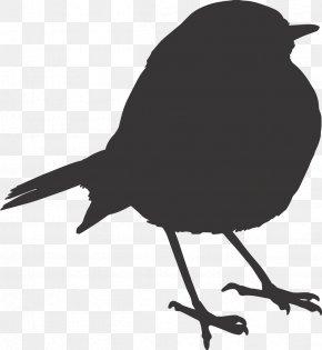 Sparrow - Bird Download PNG